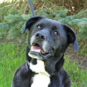 Addison County Humane Society Dogs
