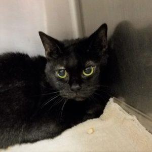 Female, found 6/14/19 in Brandon