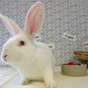Baby Rabbit Male 2