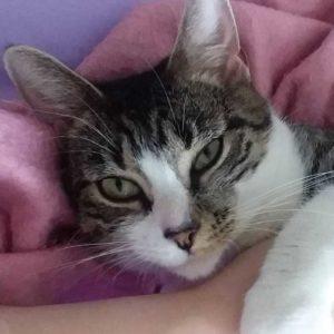 Debbie cat SQ