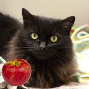Lulu with apple