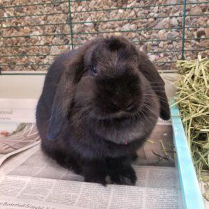 Luna Rabbit SQ2