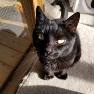 Miss Kitty SQ2