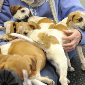 Puppies 11