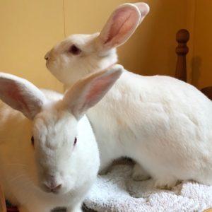 bunniesforcaitlin2